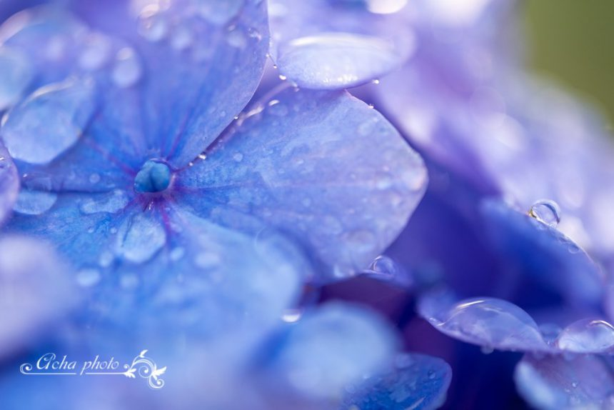 6月23日(日)開催:【マクロ撮影】初級ストロボ講座~水滴写真編~@大阪
